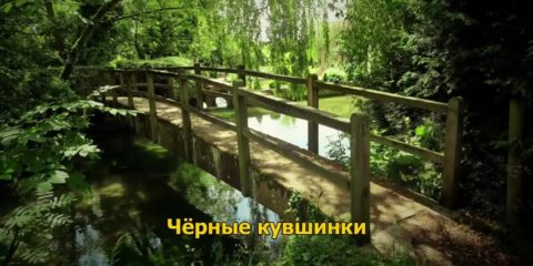 Чёрные кувшинки - Мишель Бюсси (детектив) медиа книга