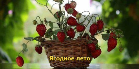 Ягодное лето – Катажина Михаляк (любовный роман) медиа книга